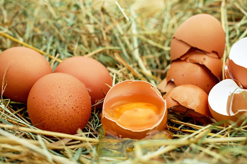 Wie lange sind Eier haltbar