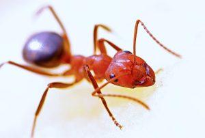 ameisensäure gegen warzen